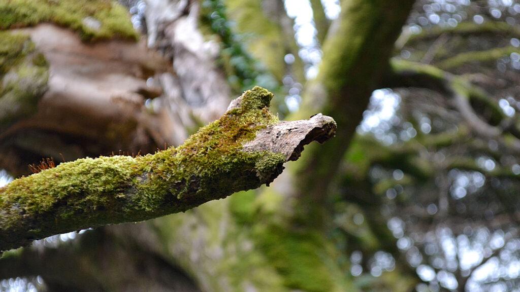 The Wonderful World of Lichen